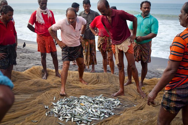 Pêcheurs d'Inde du sud regardant leurs prises